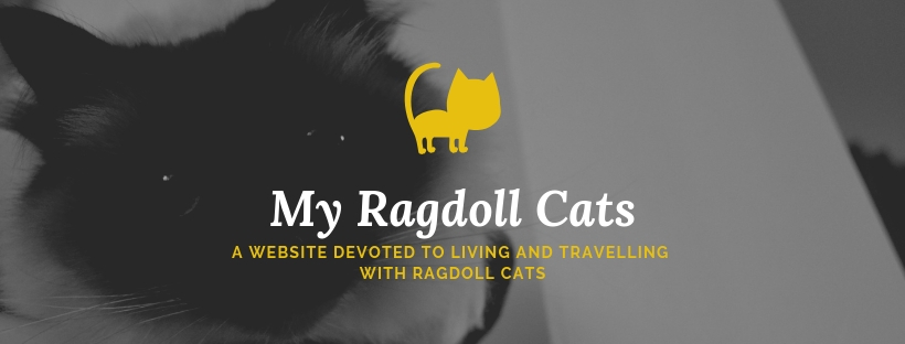 My Ragdoll cats living and travelling with cats
