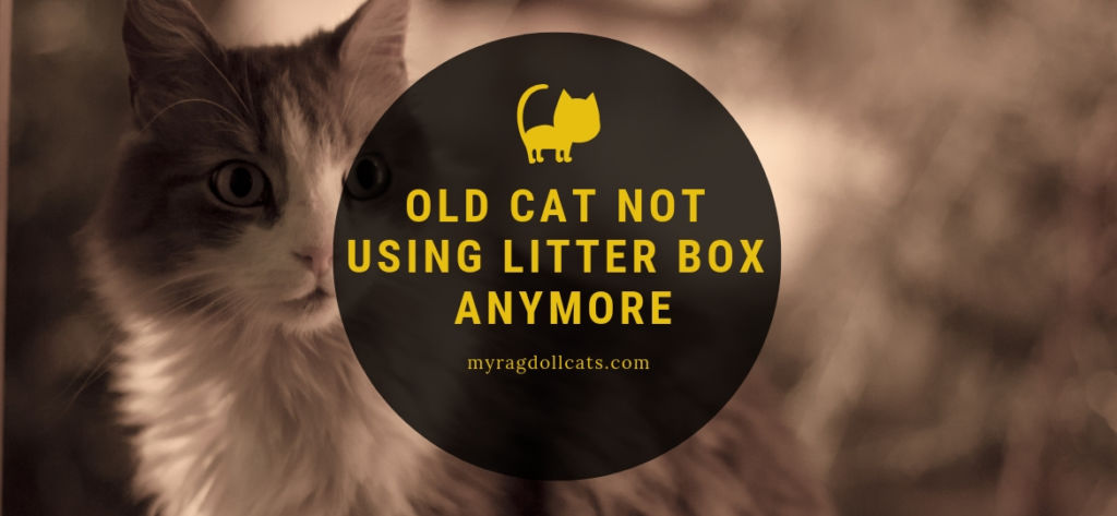 old cat not using litter box anymore