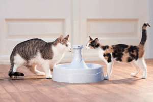 quiet cat fountains