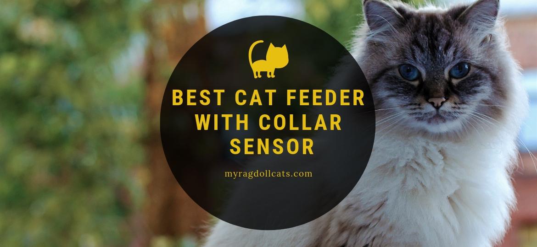 best cat feeder with collar sensor