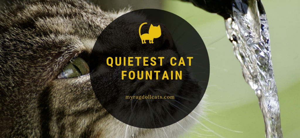 quietest cat fountain