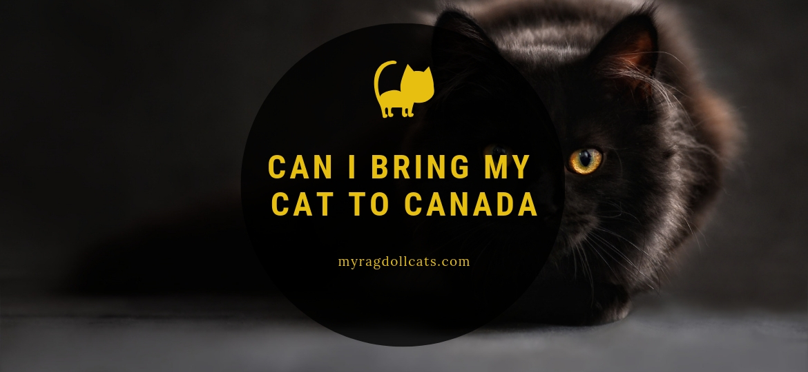 Can I Bring My Cat to Canada