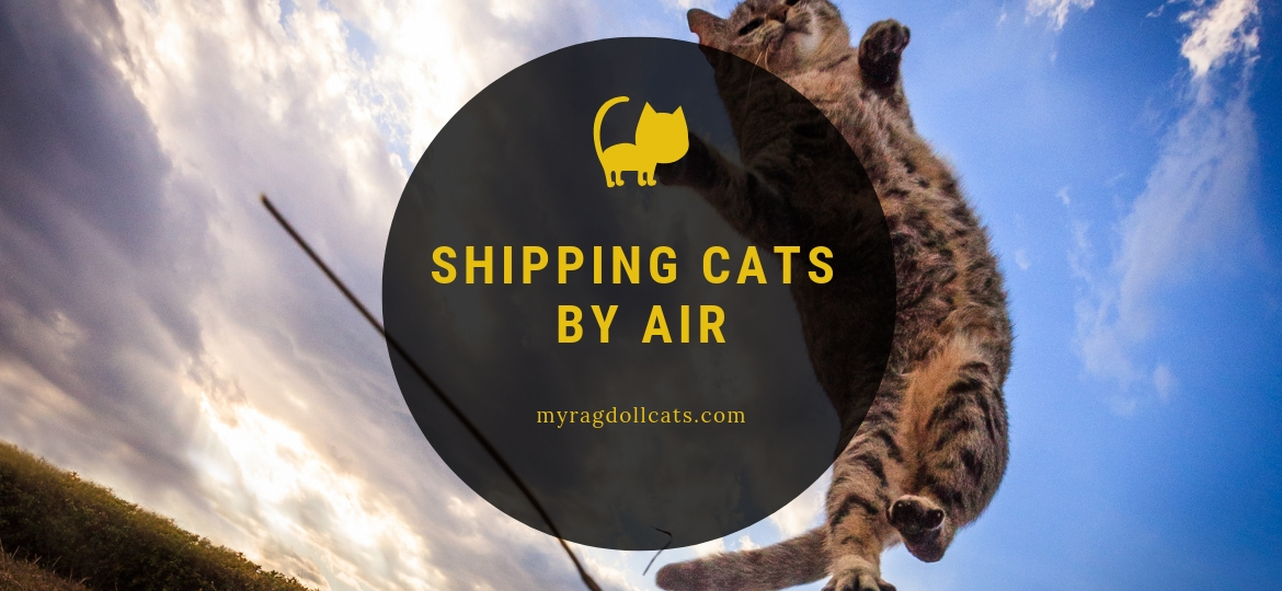 shipping cats by air