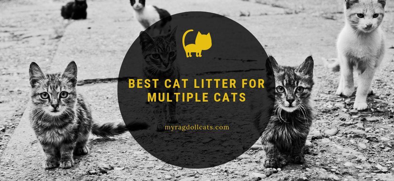 Best Cat Litter for Multiple Cats