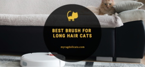 brush for long hair cats