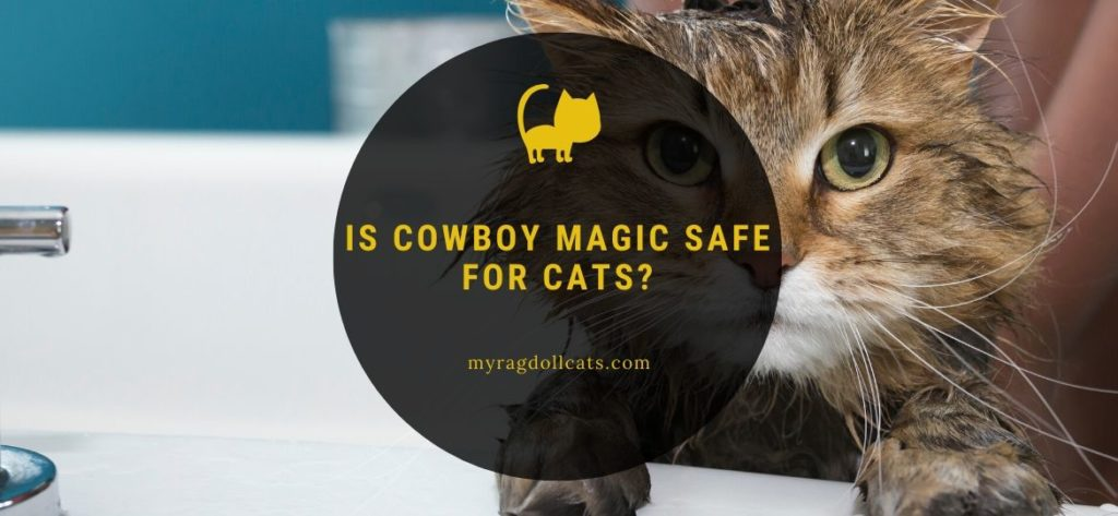 Is Cowboy Magic safe for cats (1)