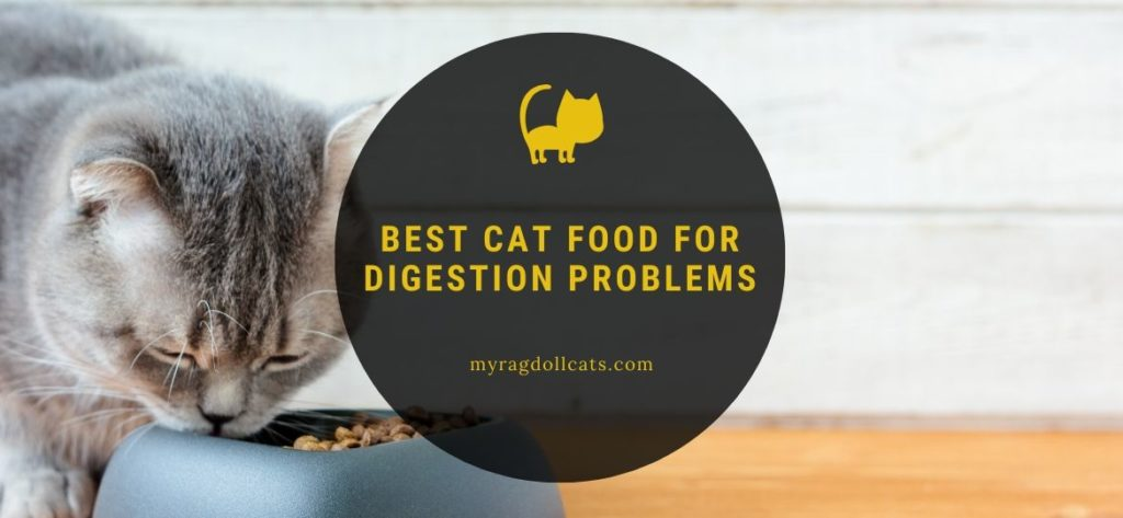best cat food for digestion problems