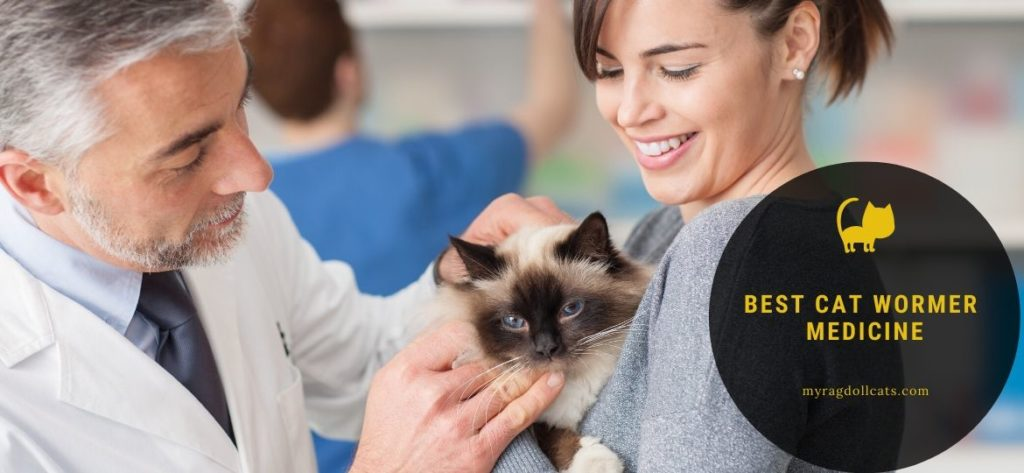best cat wormer medicine