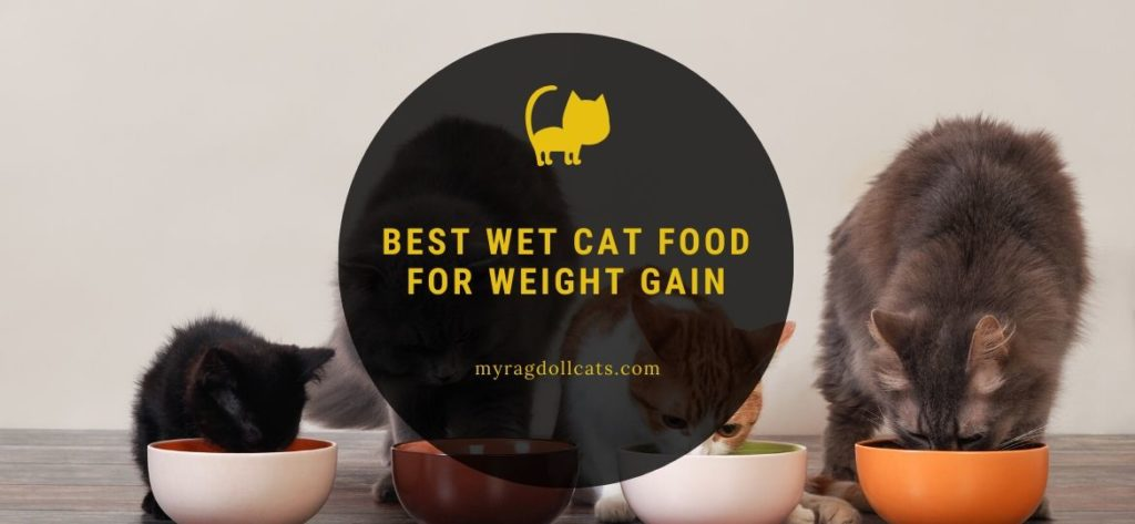 best wet cat food for weight gain