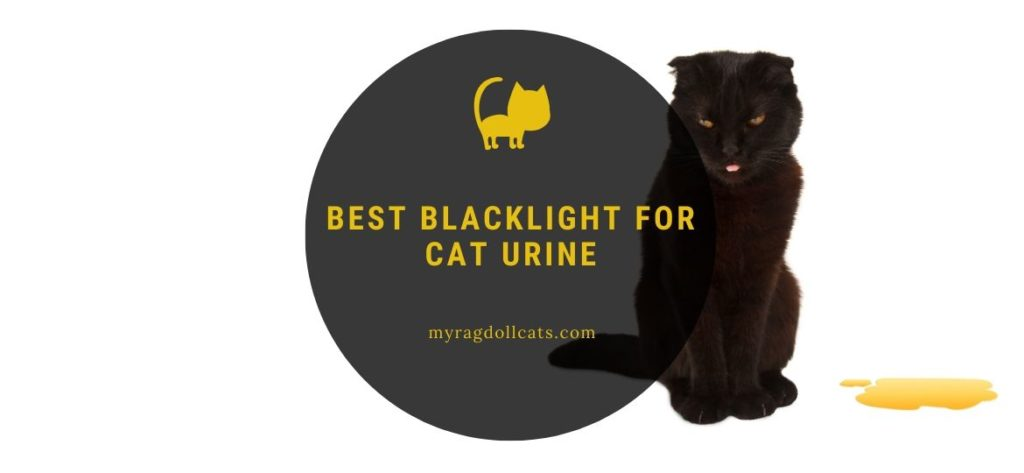 best blacklight for cat urine