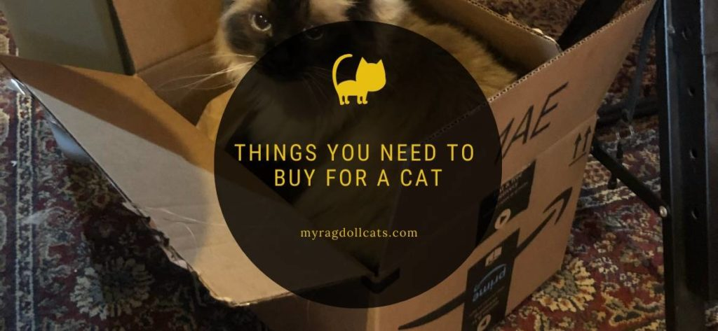 Things You Need to Buy For a Cat