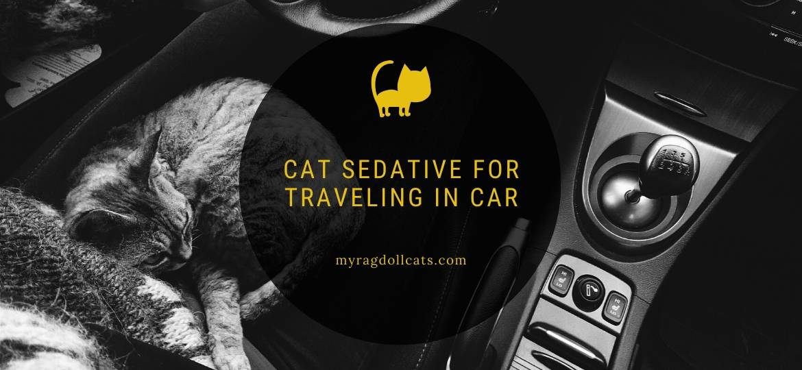 cat sedative for traveling in car