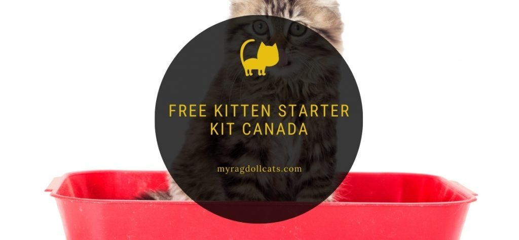 Free Kitten Starter Kit Canada