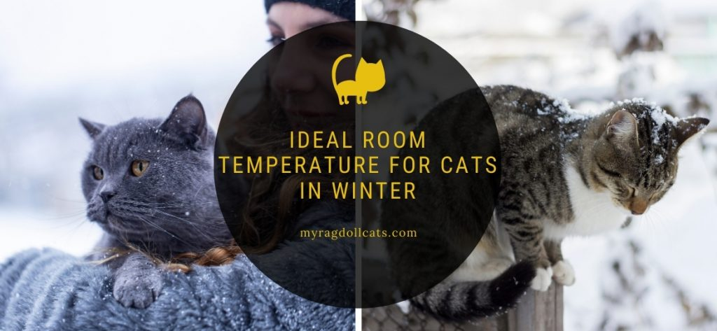 Ideal Room Temperature For Cats In Winter My Ragdoll Cats