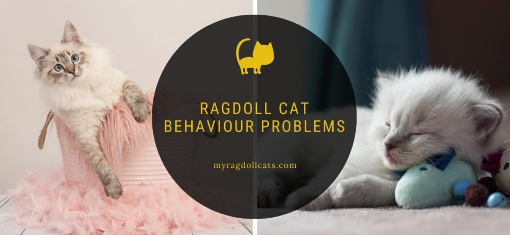 Ragdoll Cat Behaviour Problems