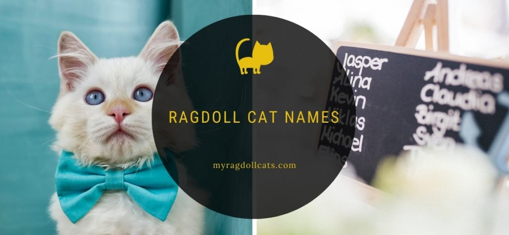 Ragdoll Cat Names